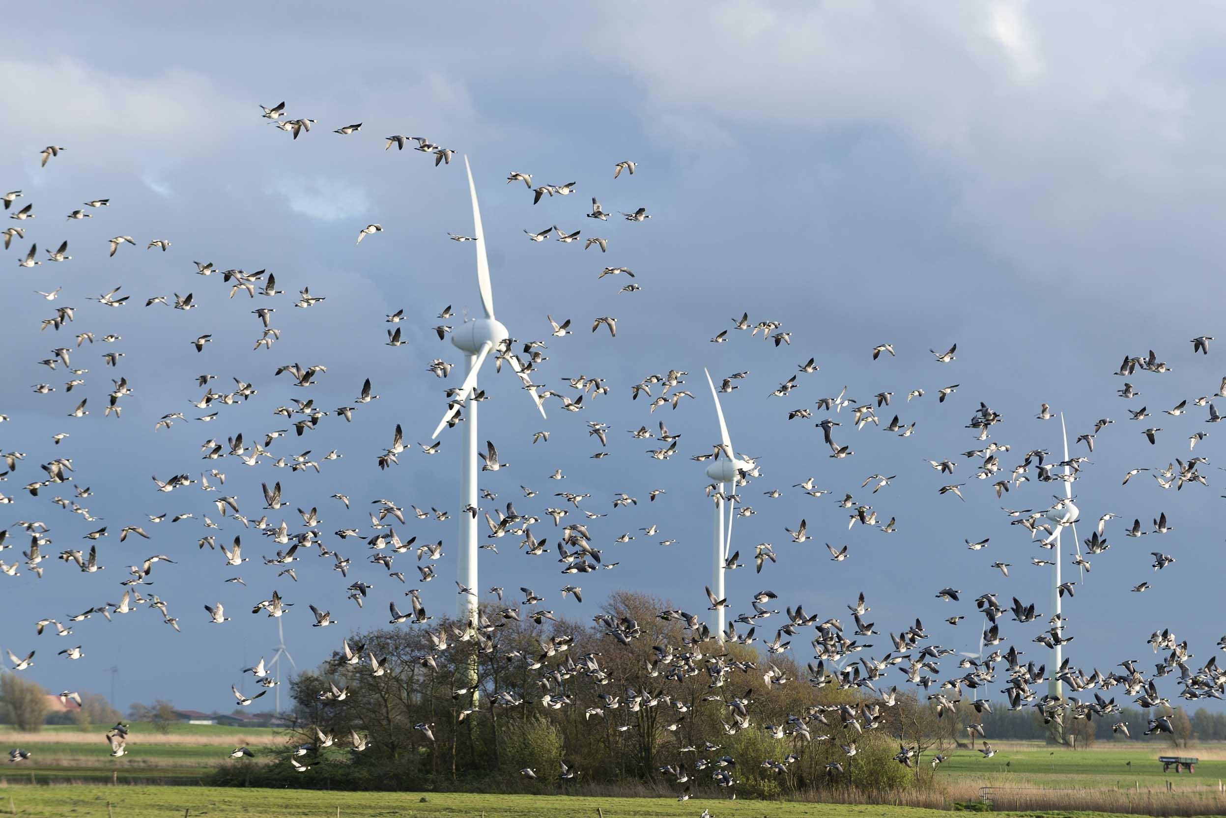 ドイツの風力発電所に飛び交う鳥