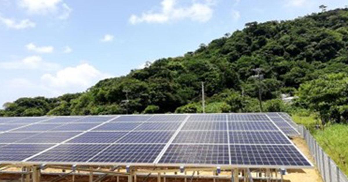 太陽光発電をしながらチョコレートのカカオを栽培 「サステなカカオ」 日本初、カカオ栽培でソーラーシェアリング