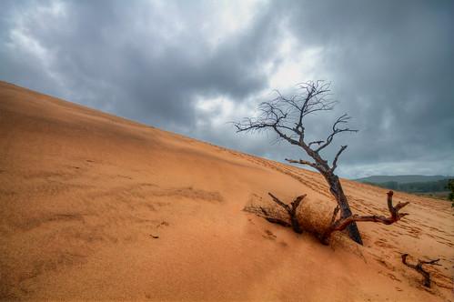 近年増えている異常気象は地球温暖化が関係している!?