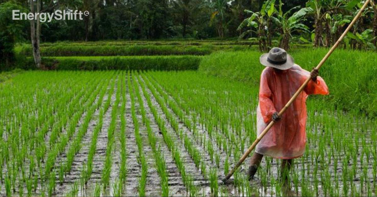 気候変動関連の災害は食料安全保障への主要な脅威-FAOレポート