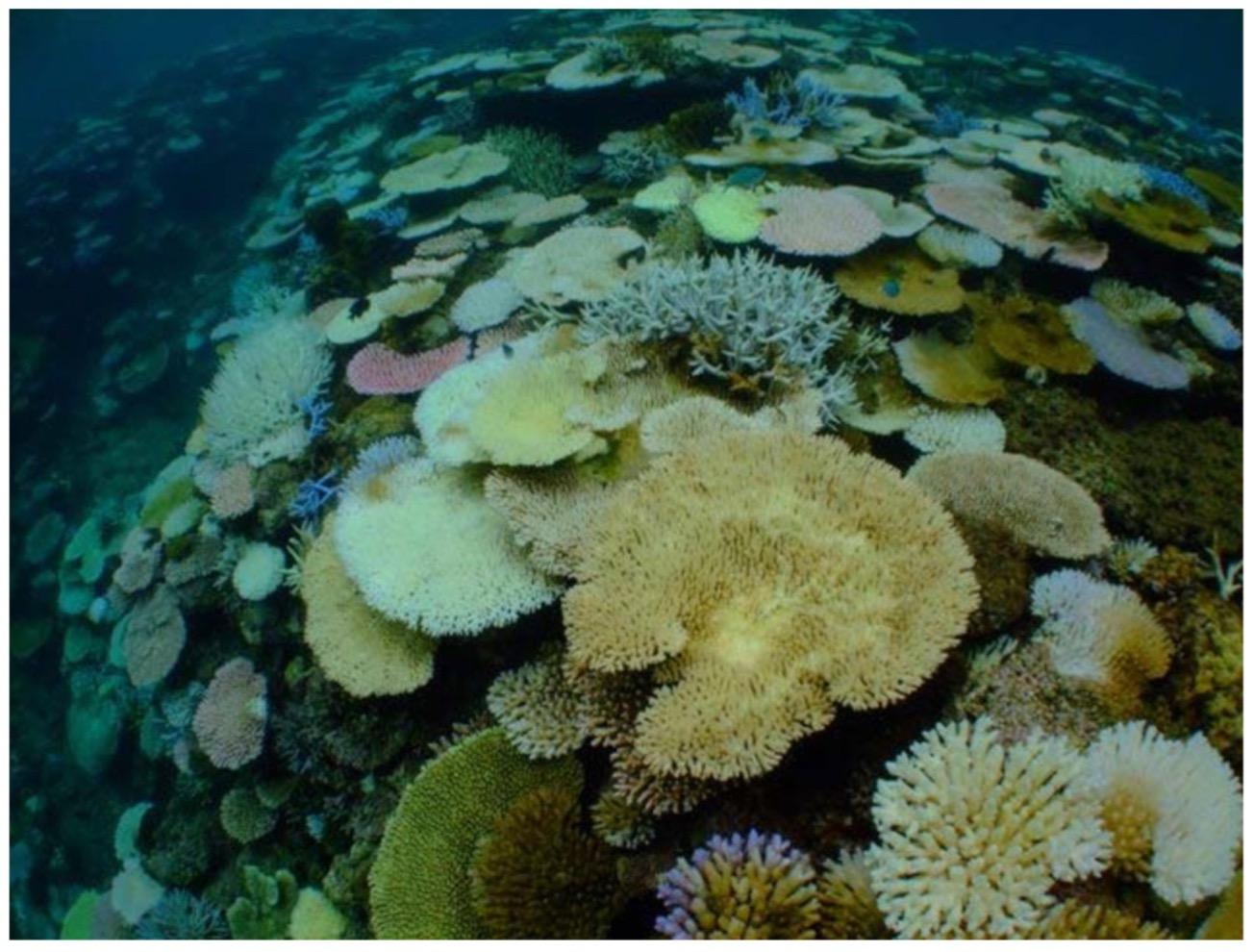 サンゴ礁の危機