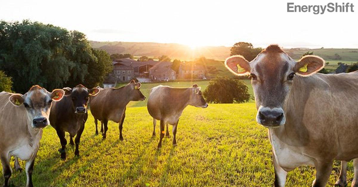 世界初、牛のげっぷからカーボンクレジット